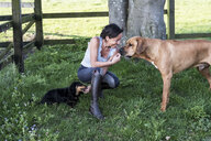 Woman kneeling in a paddock, giving treats to two dogs, a Rhodesian Ridgeback and Dachshund. - MINF09374