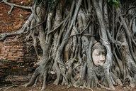 Thailand, Ayutthaya, Buddha head in between tree roots at Wat Mahathat - GEMF02460