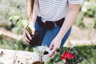 Midsection of woman potting plant while standing at table in yard - CAVF53383