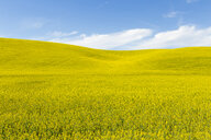 Scenic view of green landscape against blue sky - CAVF53407