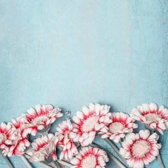 Close-up of fresh flowers - INGF06352