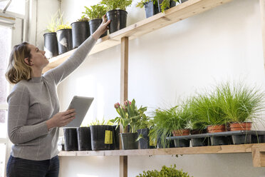 Female entrepreneur with tablet computer examining plants while standing in garden center - CAVF53883