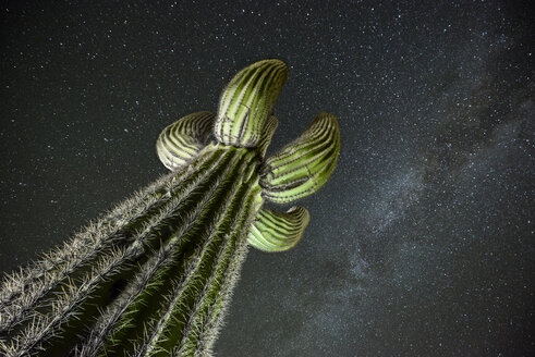 Low angle view of Saguaro Cactus against star field - CAVF53981