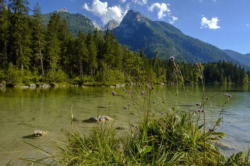 Germany, Bavaria, Upper Bavaria, Berchtesgadener Land, Ramsau, Berchtesgaden National Park, Lake Hintersee, Hochkalter mountain - LBF02187