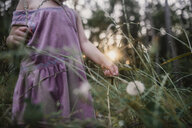 Midsection of girl holding dandelion while standing on field - CAVF54216