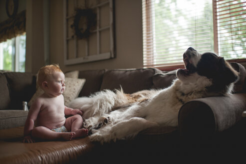 Surprised baby boy looking at dog yawning on sofa - CAVF54279