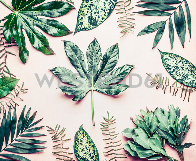 Various tropical palms and fern leaves. - INGF07200