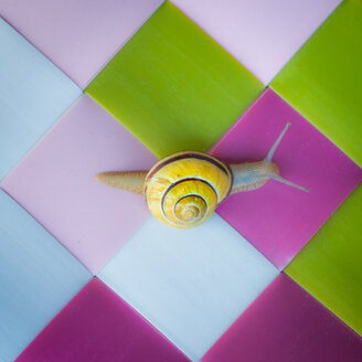 Close-up of snails. - INGF07260