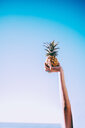 Colorful shot of female hand holding pineapple over blue sky - INGF07338
