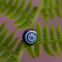 Close-up of snail on green leaf. - INGF07506