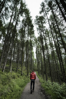 Rear view of man walking on road amidst trees in forest - CAVF54733