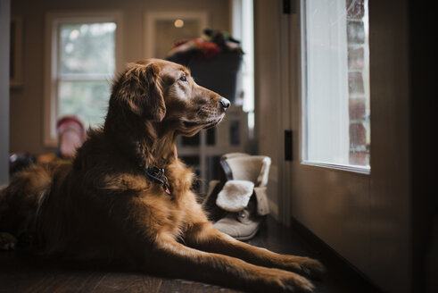 Close-up of golden retriever sitting by door at home - CAVF54934