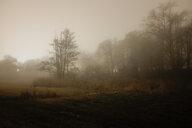A foggy forest - INGF07589