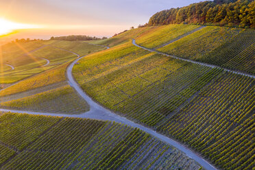 Germany, Baden-Wuerttemberg, Aerial view of Korber Kopf, vineyards at sunset in autumn - STSF01802