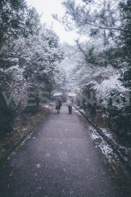 Rear view of women holding umbrella while walking on road by trees during snowfall - CAVF55067
