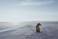 Dog sitting on snowy field against sky during sunny day - CAVF55592
