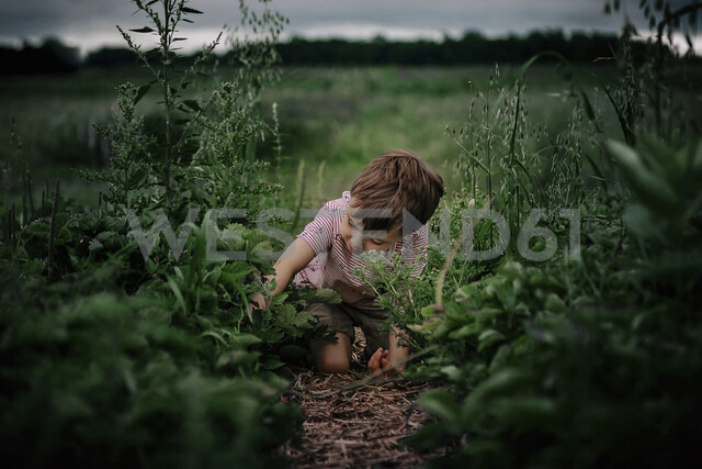 Boy picking plants while kneeling on field - CAVF55718