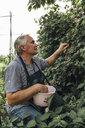 Gardener harvesting berries in garden - VPIF01119