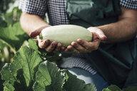Gardener holding zucchini - VPIF01128