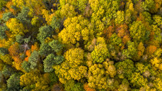 Germany, Hesse, Oestrich-Winkel, Rheingau, Aerial view in autumn - AMF06228