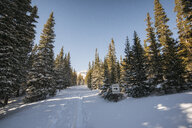 Scenic view of trees on snow covered field against clear sky - CAVF55961