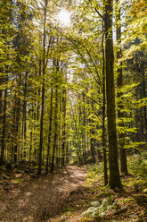 Germany, Baden-Wuerttemberg, Black Forest, Bad Wildbad, forest path in autumn - WDF04865