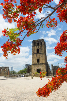Panama, Panama Viejo, view to ruin city - RUNF00233