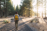 USA, North California, rear view of young man walking on a path in a forest near Lassen Volcanic National Park - KKAF02973