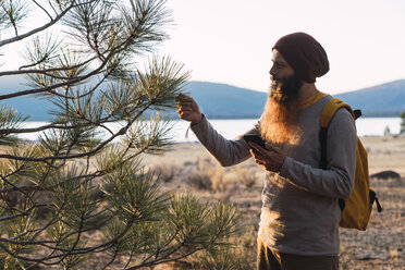 USA, North California, bearded man with cell phone examining a tree near Lassen Volcanic National Park - KKAF02985