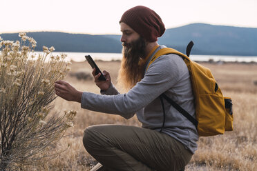 USA, North California, bearded man with cell phone examining a plant near Lassen Volcanic National Park - KKAF02997