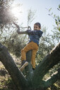 Happy boy playing in an olive tree - JRFF02115