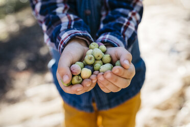 Hands of boy holding freshly picked olives - JRFF02118