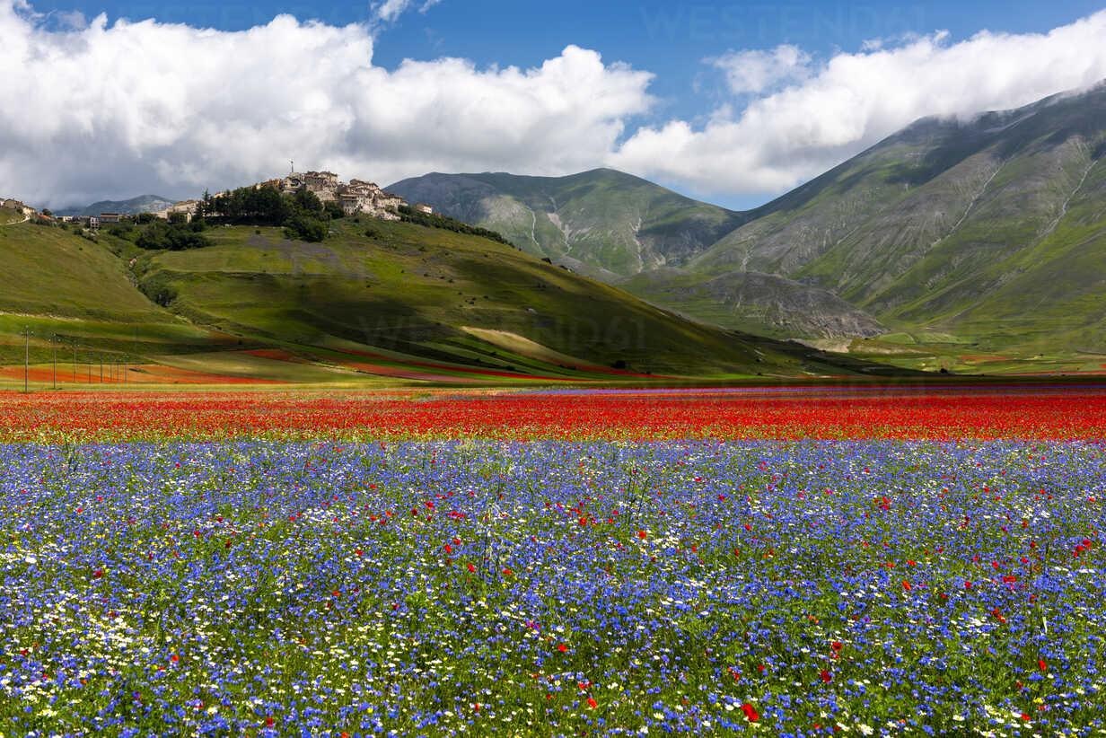 Italy Umbria Sibillini National Park Blooming Flowers On Piano Grande Di Castelluccio Di Norcia Lomf00771 Lorenzo