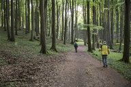 Germany, Mecklenburg-Western Pomerania, Ruegen, Jasmund National Park, hikers in beech forest on hiking trail - MAMF00248