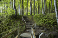 Germany, Mecklenburg-Western Pomerania, Ruegen, Jasmund National Park, Beech forest, forest path, steps - MAMF00251