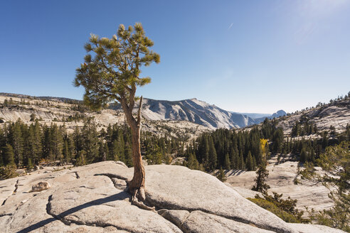 USA, California, Yosemite National Park, viewpoint with tree in autumn - KKAF03014