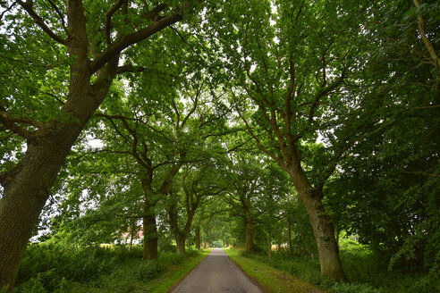 Germany, Mecklenburg-Western Pomerania, Ruegen, Sellin, empty tree-lined road - FDF00270