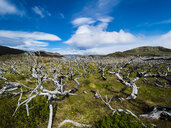 Chile, Patagonia, Torres del Paine National Park, dead trees - AMF06265