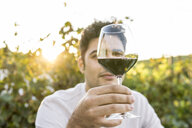 Italy, Tuscany, Siena, young man examining red wine in a vineyard at sunset - FBAF00206