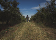 Rear view of father and son walking in orchard - CAVF56042