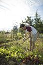 Side view of man harvesting carrot against sky at community garden - CAVF56231