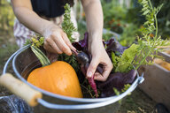 Midsection of woman washing vegetables in bucket at community garden - CAVF56249