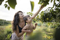 Mother holding shirtless son while picking fruit from branches at community garden - CAVF56258