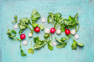 Healthy red and white radishes with leaves - INGF07826