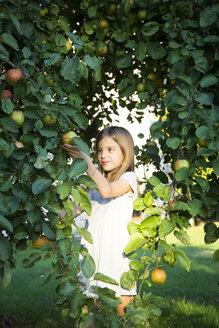Portrait of smiling little girl picking apple from tree - LVF07569