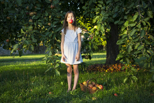 Portrait of little girl standing barefoot on a meadow with picked apple in her mouth - LVF07572