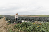 Girl playing with dog at a cabbage field - KMKF00661