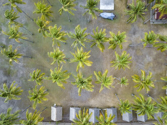 Indonesia, West Sumbawa, Aerial view of Kertasari, huts and palms from above - KNTF02369