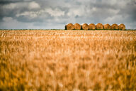 Hay bales in an agricultural field - INGF07885