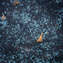 Close up shot of an autumn leaves on the street - INGF07891